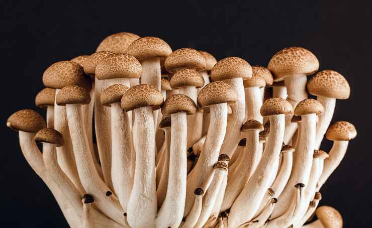 mushroom-fungi-fungus-many-53494.jpeg